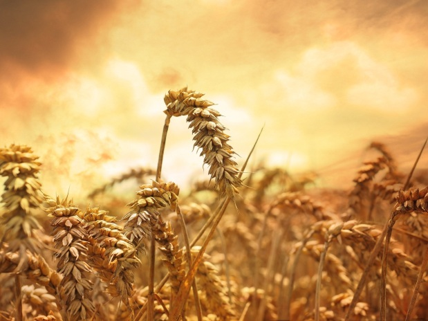 grass-plant-sky-sunset-field-wheat-905919-pxhere.com