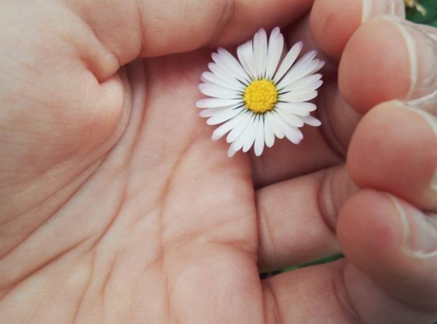 hand-plant-girl-white-flower-petal-969825-pxhere.com